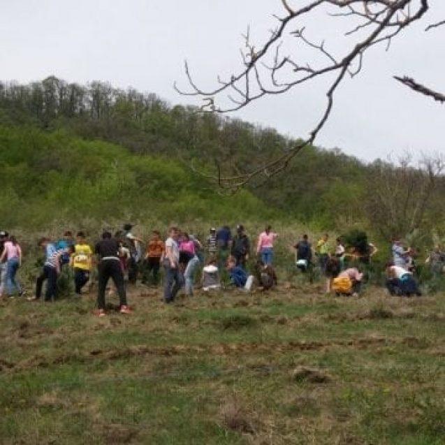 FOTO: Felicitări! 1000 de puieţi de pin negru, platați la Dipșa