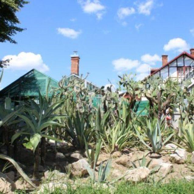 Rostul de dimineață: Cactușii din Grădina Botanică și mesajul lor secret pentru Bistrița…