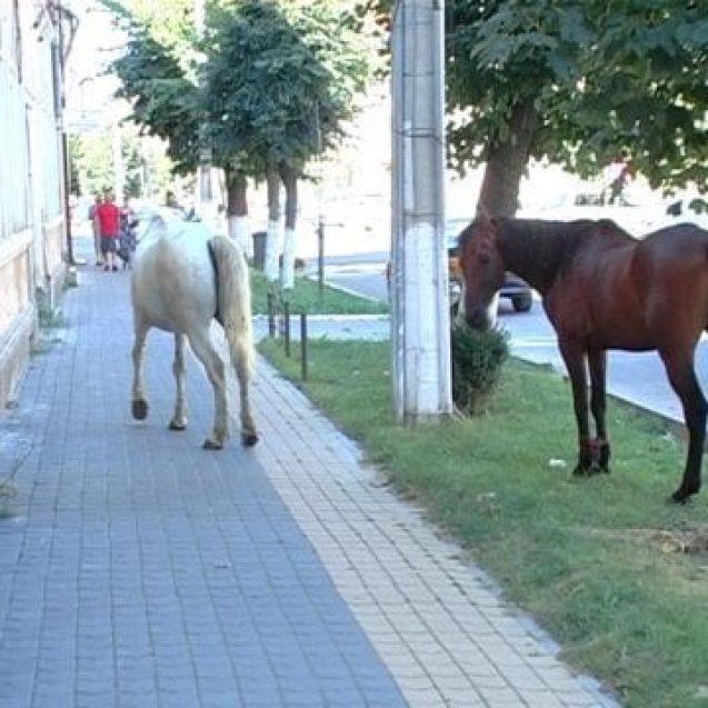 Alo? Poliția? Veniți repede! Doi cai frumoși se plimbă pe stradă!