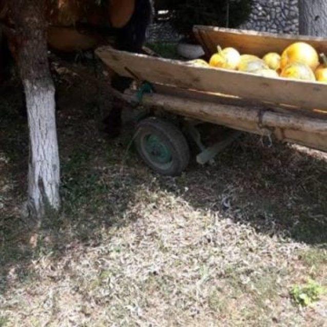 FOTO – Un bărbat din Dumitra se luptă să trăiască după ce a căzut dintr-o căruță plină cu dovleac