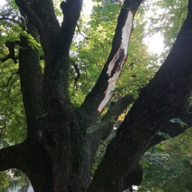 Tomograf pentru copaci. Ecologiștii vor un aparat care să-i spună Primăriei Bistrița când e cazul să bage drujba în arbori