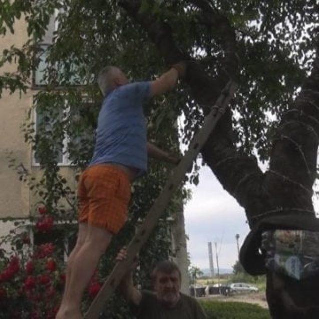 VIDEO – Cum a fost pedepsit bărbatul care a îmbrăcat cireșul de pe Mesteacănului cu sârmă ghimpată și cum explică gestul