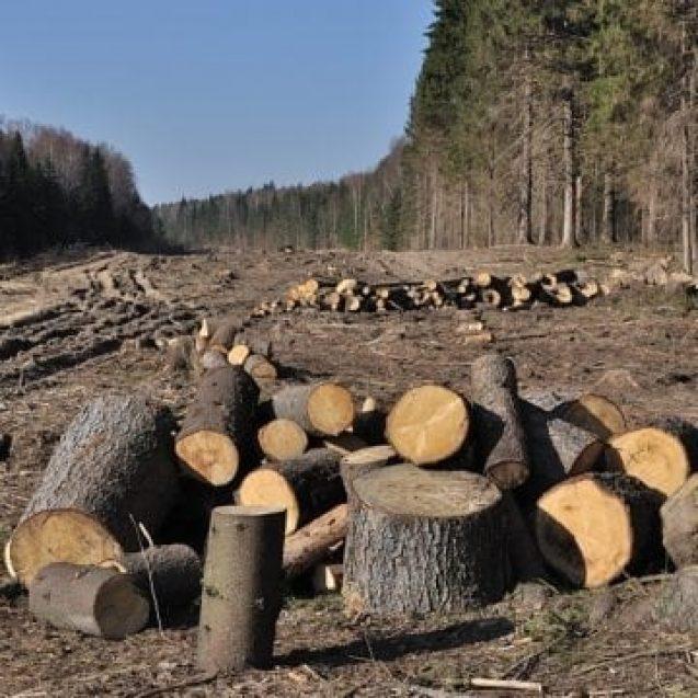"""Comuna campioană la """"chelit"""" pădurea. Copacii tăiați în ultimii 15 ani puteau absorbi peste 200 de tone de gaze nocive"""