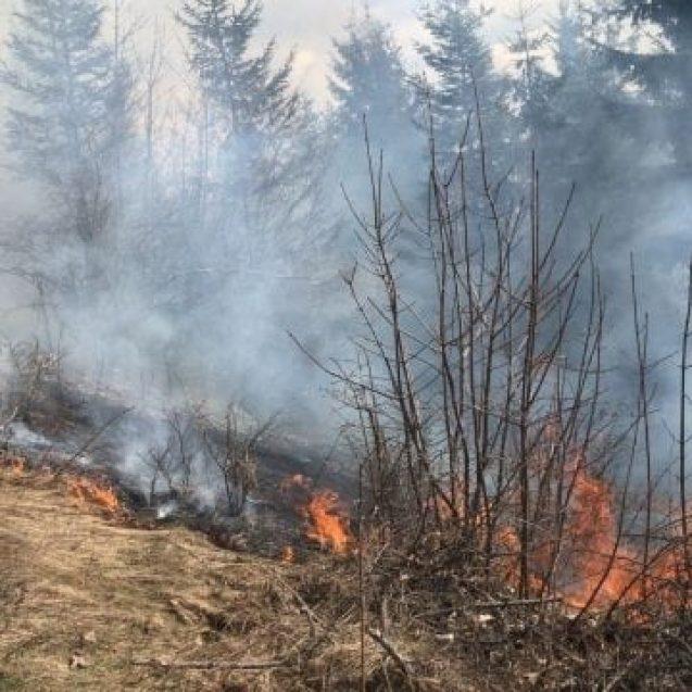 FOTO ILVA MARE: Incendiu de vegetație uscată, cu risc de extindere la pădure