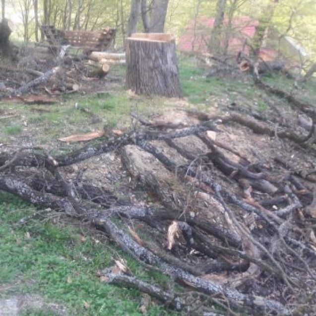 PARVA: Tăia copaci în pădure și a ajuns la spital cu capul spart