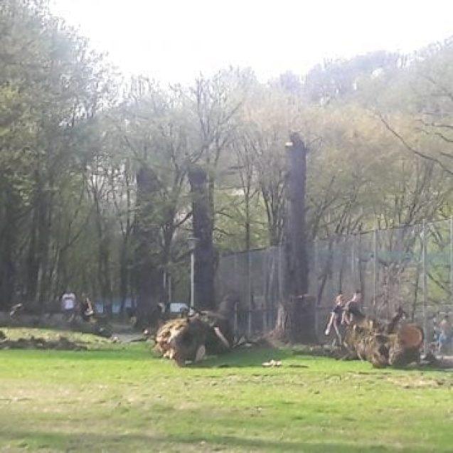 FOTO: Municipalitatea a pătruns în Pădurea Schullerwald… cu drujba!