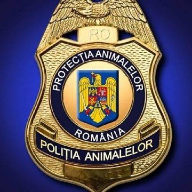 Atât de aproape: În scurt timp, animalele vor avea polițiști care să le protejeze!