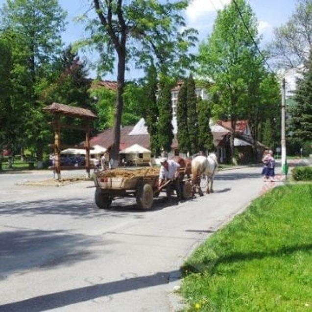 Rostul de dimineață: Când pe cal îl apucă nevoile în mijlocul drumului și știi că ai un primar rău de gură…