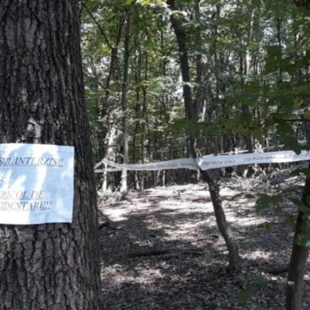 """""""Acces interzis. Pericol de accidentare!"""", în pădurea-parc Schullerwald"""