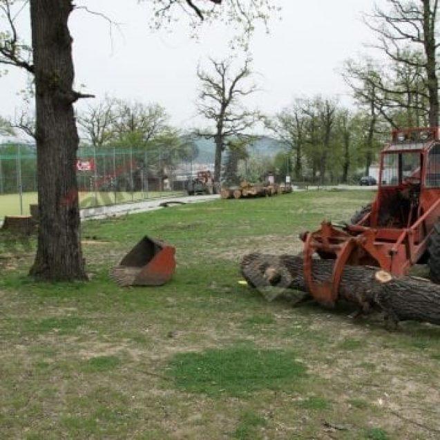 Tăierea stejarilor seculari din Schullerwald, care adăposteau un gândac protejat de lege, infracțiune!